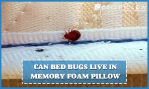 Can Bed Bugs Live in Memory Foam Pillow | Problem Solved.   Best